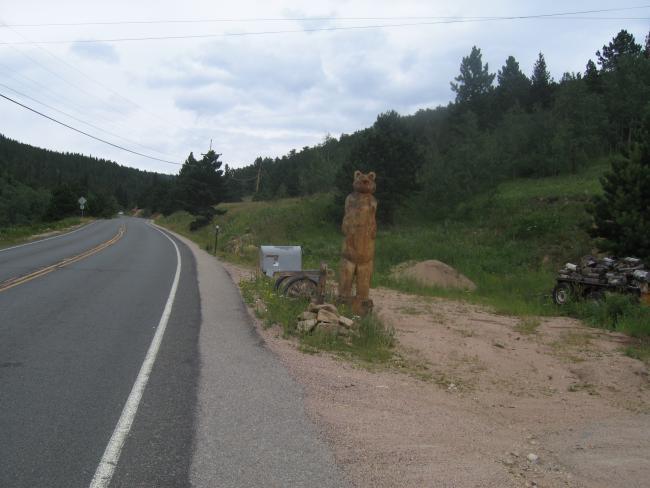 Bear on Lefthand Canyon Rd