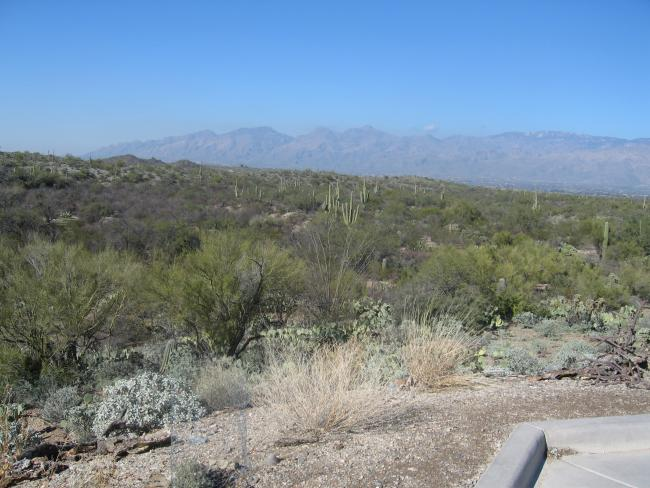 Cactus Rd looking N Catalina Mtns