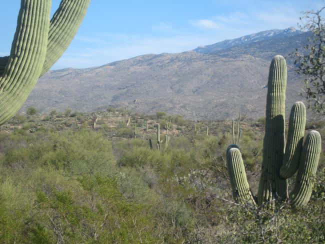 Cactus Rd looking at protected area