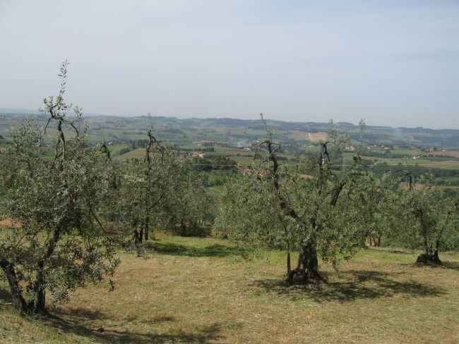 Countryside south of Florence