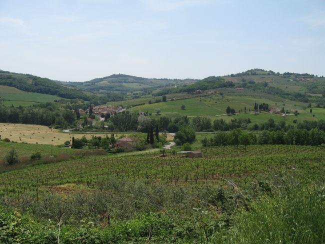 Olive gardens near San Guisto