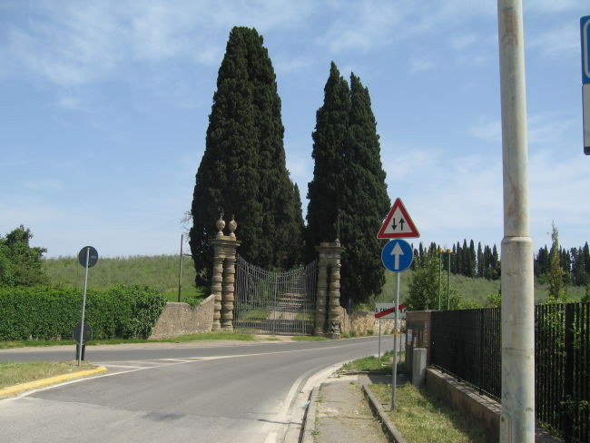 Rows of trees in Mercatale